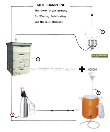 Milk+production+process+flow+chart